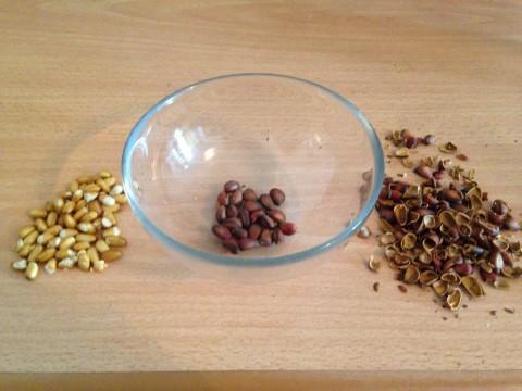 Pine nuts 4